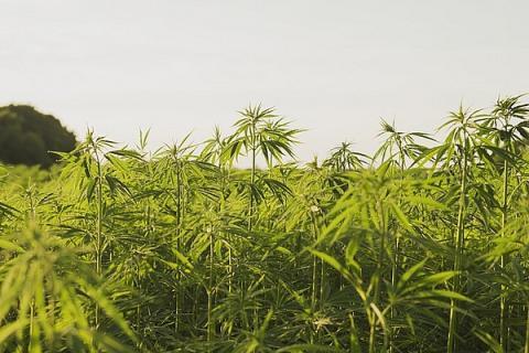 удобрения для марихуаны аутдор